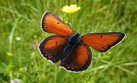 Motýl na Gruni