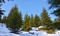 les pod vrcholem